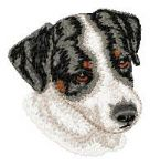 Jack Russell Terrier 9
